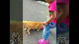Rutinitas pagi Caca nemenin kakaknya sekolah sambil berburu kucing2 liar...