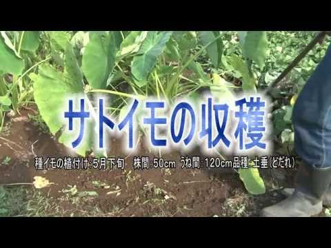 市民農園を楽しむ 「市民農園栽培アドバイス」('14・10月編)