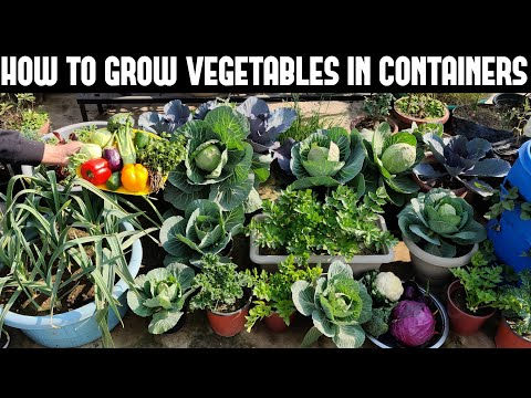 , title : 'How To Grow Vegetables in Containers-FULL INFORMATION'