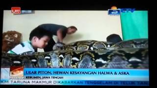 Video Berteman dengan ular python MP3, 3GP, MP4, WEBM, AVI, FLV September 2017