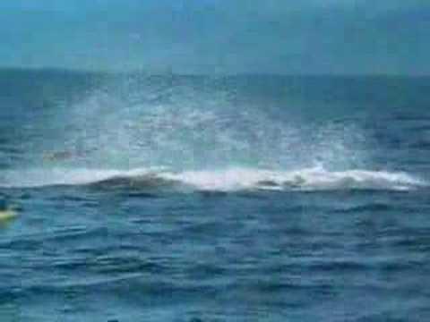 Una ballena mata un hombre
