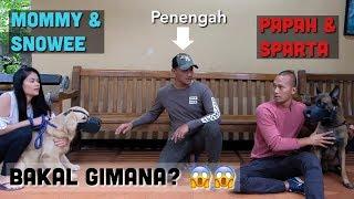 Video AKHIRNYA! SNOWEE & SPARTA BERTEMU LAGI! (VIDEO PALING DIREQUEST BANGET!!) MP3, 3GP, MP4, WEBM, AVI, FLV April 2019