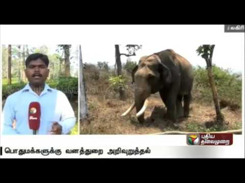 Live-report-Forest-official-intensify-efforts-to-trap-wild-elephant-in-Nilgiri