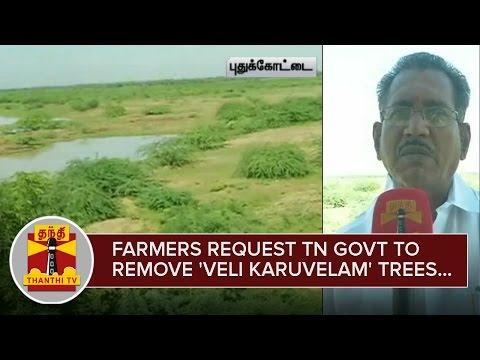 Farmers-request-TN-Govt-to-remove-Veli-Karuvelam-Trees-from-Kavinadu-Kanmai--Thanthi-TV