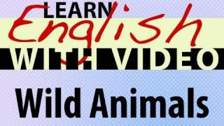 Learn English With Video - Wild Animals