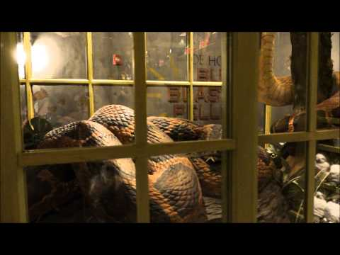 Magical Menagerie, Diagon Alley, Universal Studios Florida