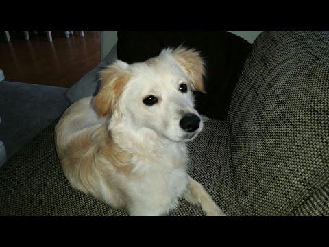 Buster wird nun Barney, Zypernhund Mischling