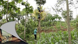 Download Video Lentera Indonesia - Jumali Wahyono Pemberdaya Desa Pogog, Wonogiri MP3 3GP MP4