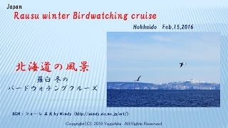 Rausu Japan  city pictures gallery : 羅臼 冬のバードウォチングクルーズ Japan ; Rausu winter Birdwatching cruise