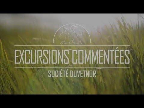 Excursions commentées - Ornithologie