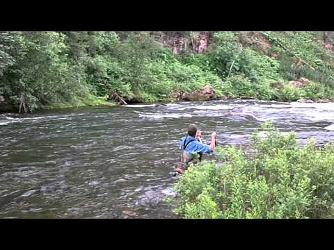 Fly Fishing The Pine River (Los Piños), Colorado