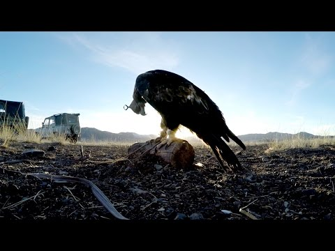 GoPro: Eagle Hunters in a New World Trailer (видео)