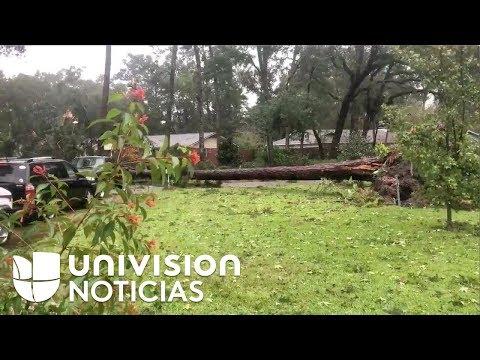 Árboles caídos y fuertes lluvias por el paso del huracán Michael en Tallahassee