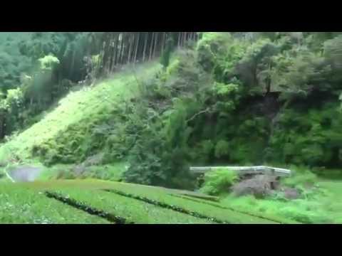 Zöld tea Videók