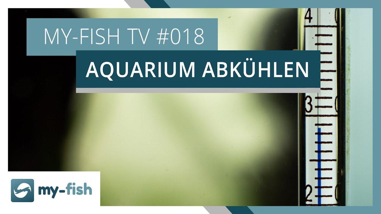 my-fish TV - Deine Nr. 1 Anlaufstelle für alle Themen rund um die Aquaristik 46