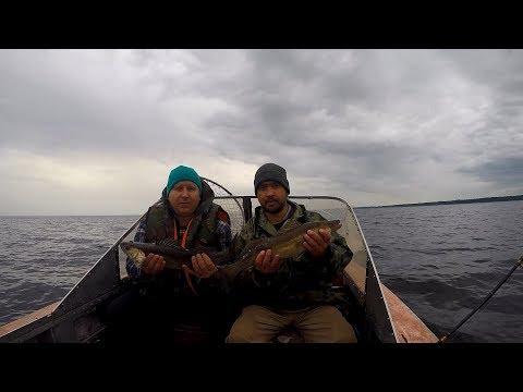 ловля сома в ладожском озере