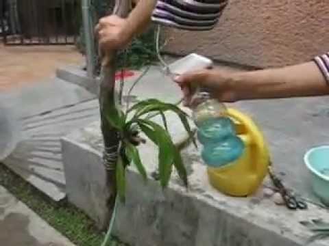 Orquídea, su nueva rama