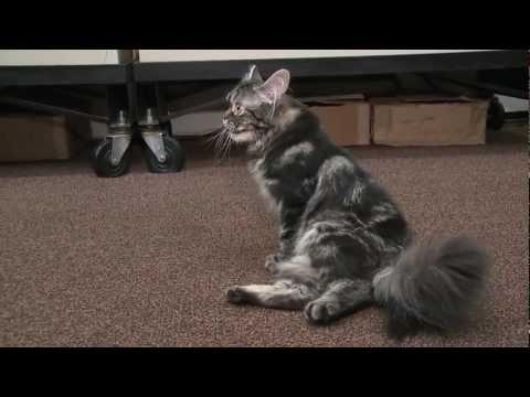 Katten Flipper har problem med ryggen