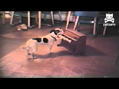 Puppy Sings and Plays the Piano