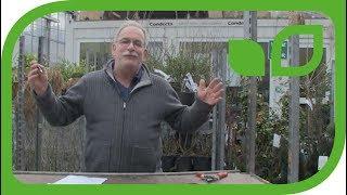 Der Gartenvideo Vorsatz - pro Tag ein Video!