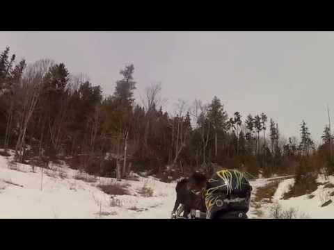 Un orignal attaque un couple de motoneigistes !