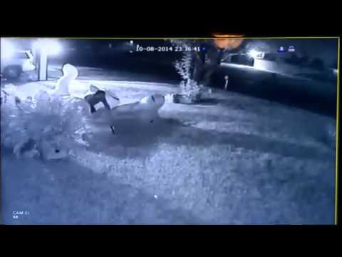 YouTube: Sí, los ladrones también roban gatos inflables