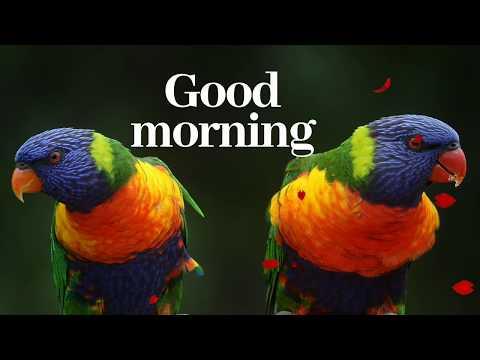 Love SMS - Good morning wishing status- good morning WhatsApp status- happy Monday good morning video
