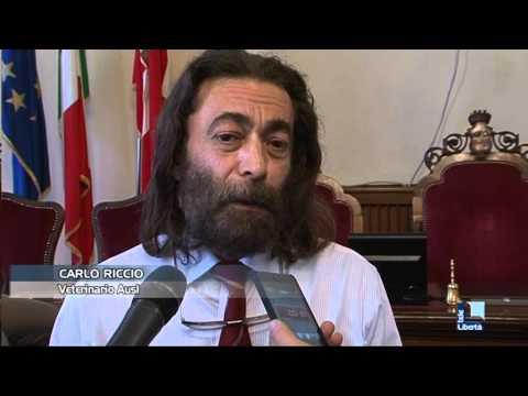 Gatti liberi a Piacenza, entra in vigore la nuova normativa: vietato dare cibo