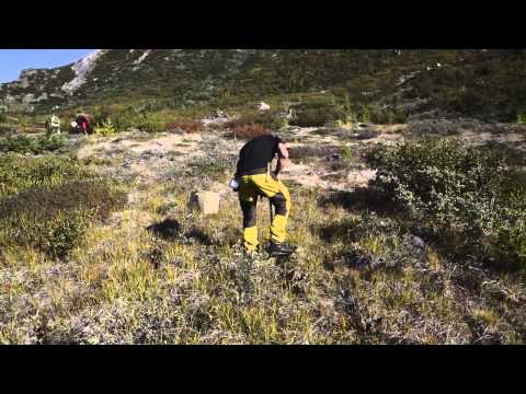 south Greenland tree planting September 2015