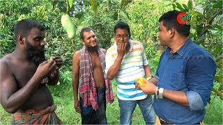 Banana Mango(ব্যানানা...