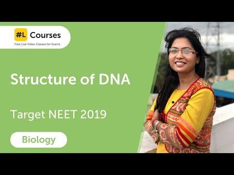 Structure of DNA | Molecular Basis of Inheritance | Biology | Target NEET 2019 | Day 41