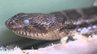Reptiles: health in snakes