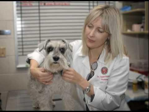 Kelly Vanderlaske Terry Center: New Era in der Veterinärmedizin