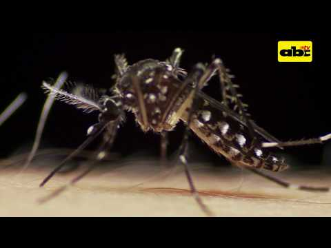 Dengue disminuyó hasta en un 85% este año