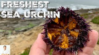 Foraging For The Freshest Sea Urchin In The World by Diaries of a Master Sushi Chef