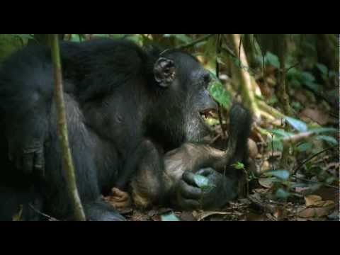 Chimpanzee (Making of Chimpanzee)