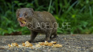 One week in Guadeloupe : for best quality click here https://vimeo.com/109191770 A few shots that I made in 4K and 1080p 200mb/s with my GH4 during a trip ...
