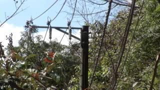 VÍDEO: Iniciativa da Cemig auxilia na preservação de espécie de primata ameaçada de extinção