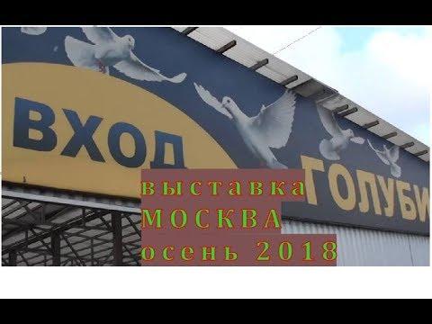 когда будет выставка голубей в москве