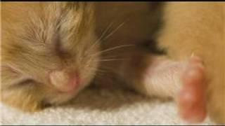 Kitten Care : What Do Newborn Kittens Look Like?