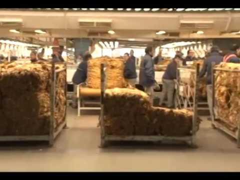 Ministro da Agricultura conhece realidade da fumicultura gaúcha