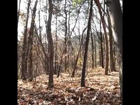 incredibile ma vero telecamera riprende un fantasma nel bosco