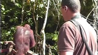 Borneo Orang Oetan 2007