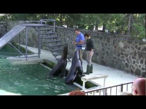 Oroszlánfóka-show a Nyíregyházi Állatparkban. Seal Lion Show in Nyíregyháza  Zoo