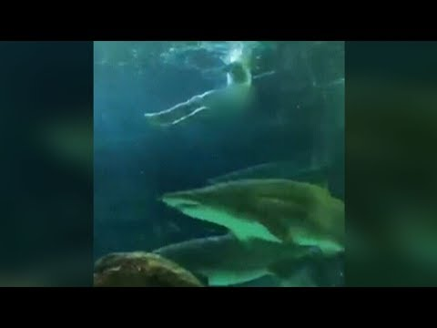 Man Skinny-dips In Shark Tank At Toronto's Ripley's Aquarium