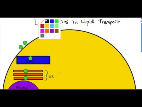 Lipid Biosynthesis Pt. 2