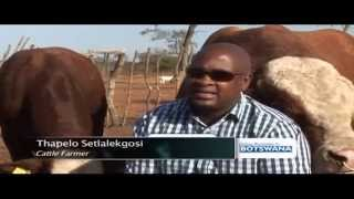 Botswana is known as cattle country, with an estimated herd of three million cattle, cattle rearing is part of life for the ordinary Motswana and this has been going ...