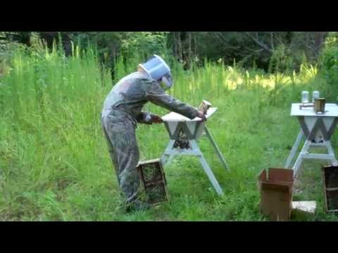 Installation of Two – Gardners Apiary 3lb Italian Bee Packages in Centreville, MS