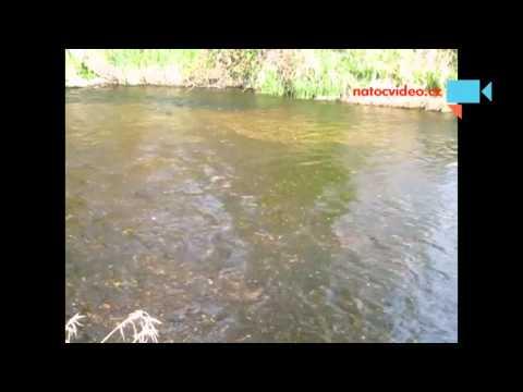 Řeka Lužnice v Českých Velenicích 24.4.2016