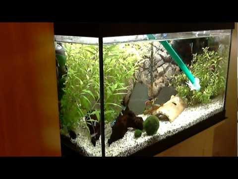 Aquarium / tank: easy water change